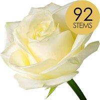 92 Classic White Roses