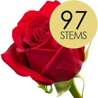 97 Classic Bright Red Freedom Roses