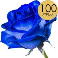 100 Classic Blue Roses