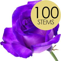 100 Luxury Purple Roses