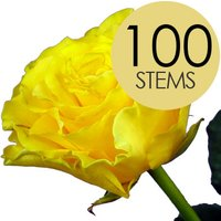 100 Luxury Yellow Roses