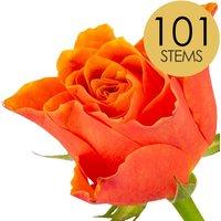 101 Classic Orange Roses