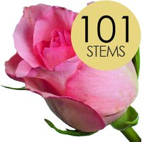 101 Classic Pink Roses