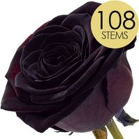 108 Wholesale Black Roses