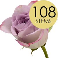 108 Luxury Lilac Roses