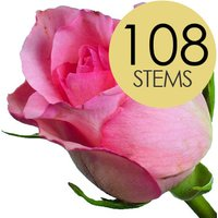 108 Wholesale Pink Roses