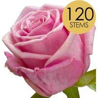 120 Luxury Pink Roses
