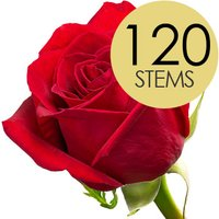 120 Wholesale Bright Red Freedom Roses