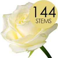 144 Wholesale White Roses