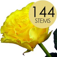 144 Wholesale Yellow Roses