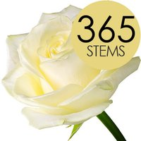 365 Wholesale White Roses