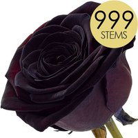 999 Wholesale Black Roses