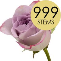 999 Wholesale Lilac Roses