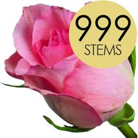 999 Wholesale Pink Roses