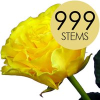 999 Wholesale Yellow Roses