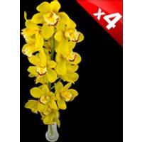 4 Classic Yellow Cymbidium Orchids