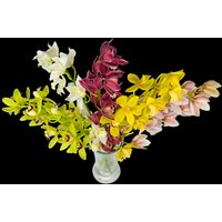 5 Classic Mixed Cymbidium Orchids