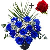 A single Bright Red Freedom Rose surrounded by 11 Blue Roses