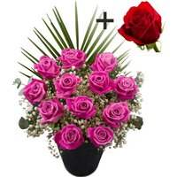 A single Bright Red Freedom Rose surrounded by 11 Pink Roses