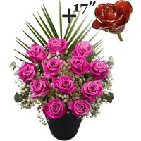 A single 17Inch Gold Trimmed Red Rose surrounded by 11 Pink Roses