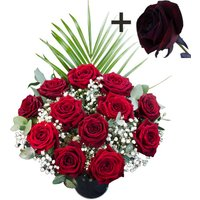 A single Black Rose surrounded by 11 Deep Red Naomi Roses