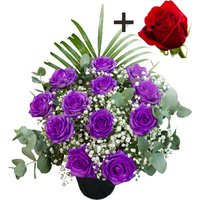 A single Bright Red Freedom Rose surrounded by 11 Purple Roses