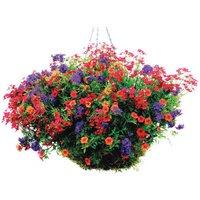 Bayer Phostrogen All-Purpose Plant Food - 800g