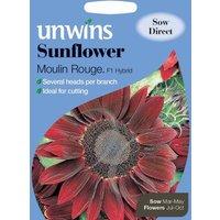 Unwins Sunflower Moulin Rouge Flower Seeds