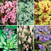 Gardening Direct Shady Border Collection