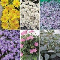 Gardening Direct Alpine Rock Garden Collection