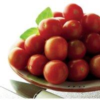 Gardening Direct 12 Tomato Gardeners Delight Plants