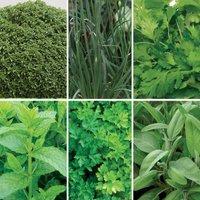 Gardening Direct Tasty Herb Collection
