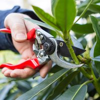 Darlac Professional Left-Handed Pruners