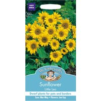 Mr Fothergills Sunflower Little Leo Seeds