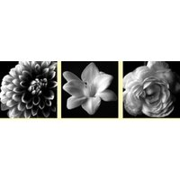 Arthouse Art B&W Floral Set of 3, 000312