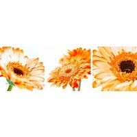 Arthouse Art Orange Florals Set of 3 Printed Canvases, 002556