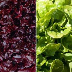 Gemüsesamen-Sortiment Eichblatt- und Pflücksalate
