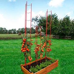 Tomaten-Rankgitter XXL, 3-teilig, Höhe 236 Zentimeter