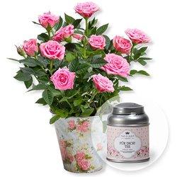 Rosafarbene Rose im Nostalgie-Topf und Tafelgut Für Dich Tee