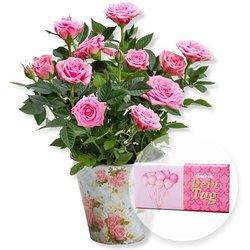 Rosafarbene Rose im Nostalgie-Topf und Schokolade Dein Tag