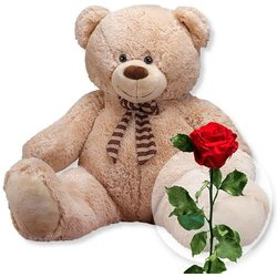 XXL-Teddybär (150cm) und haltbare rote Rose