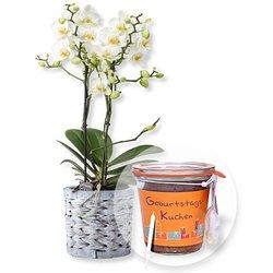 Weiße Orchidee im grauen Korbtopf und Kuchen im Glas Geburtstag