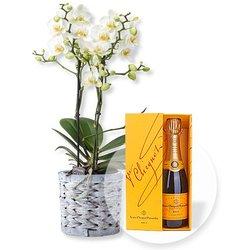 Weiße Orchidee im grauen Korbtopf und Champagner Veuve Clicquot