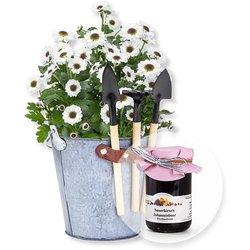 Chrysantheme im Zink-Eimer mit Gartenwerkzeug und Fruchtaufstrich