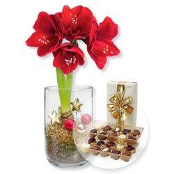Rote Amaryllis im Glas und Belgische Pralinen