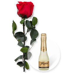 1 haltbare Rose rot und Freixenet Semi Seco