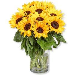 10 Sonnenblumen