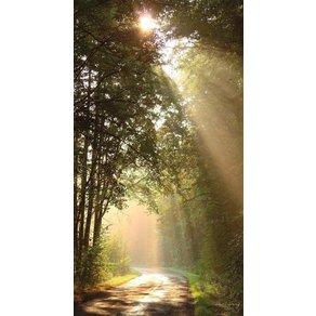 Rasch Fototapete Sonnenstrahlen mehrfarbig FSCÂ
