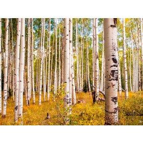 Papermoon Fototapete Birches in Colorado Rocky Mountains Vlies verschiedenen Grössen