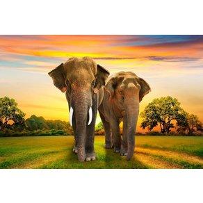 Papermoon Fototapete Elephants Family Vlies in verschiedenen Grössen